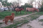 A Dog Is Introduced to a Pair of Horses - Wait Until You See What Happens Next