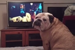 Dog Watches a Horror Movie - What He Does During Scary Scene Is Unbelievable!